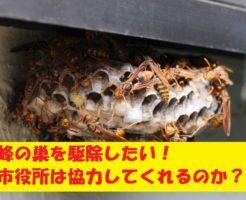 蜂の巣の駆除は市役所で対応してくれる?補助金は出るのか?