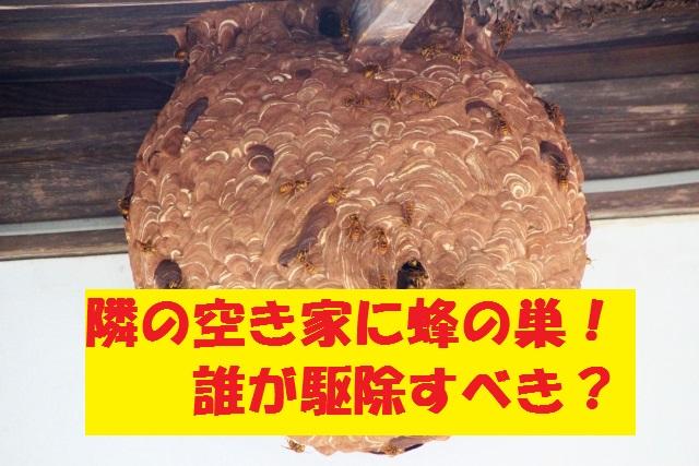 隣の空き家に蜂の巣ができた!誰が駆除すべきか悩んだ話